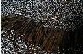 LOGO_Vanilla Beans (and Cuts or Powder)