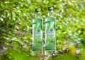LOGO_Birch water, birch sap