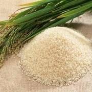 LOGO_Organic Rice Basamati/non-Basamati