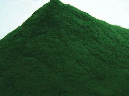 LOGO_Organic Spirulina & Chlorella