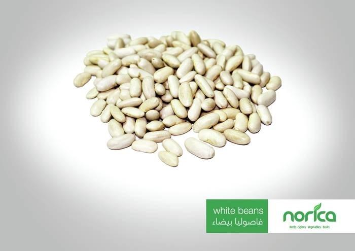 LOGO_Egyptian Pulses