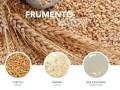 LOGO_Organic Wheat: Grain, Flour, Starch, Gluten, Glucose syrup
