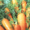 LOGO_Frisches Bio Gemüse