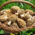 LOGO_Mushrooms