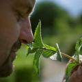 LOGO_Südtiroler Heil- und Gewürzpflanzen