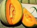 LOGO_cantalupo Melone