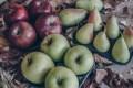 LOGO_Organic Apple