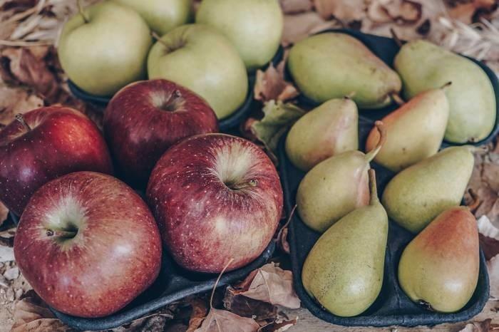 LOGO_Organic Pear