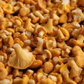 LOGO_Organic Mushrooms