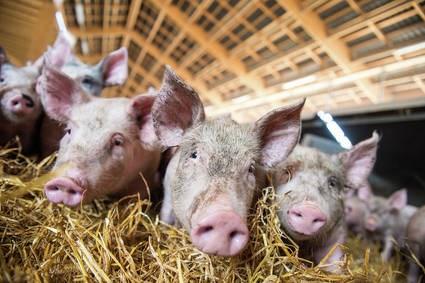 LOGO_Teilstücke vom Bio - Schwein