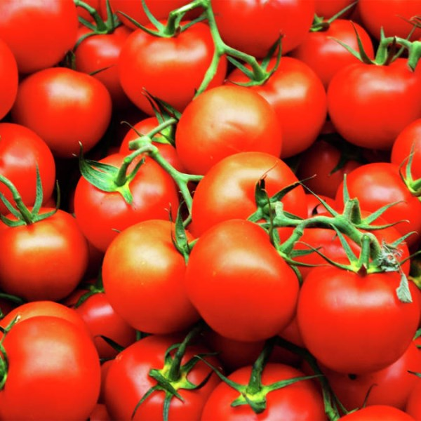 LOGO_Organic tomato powder