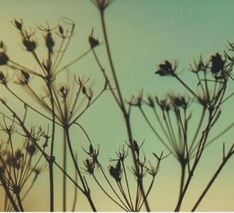 LOGO_Spice seeds