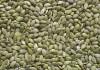 LOGO_Organic Shine skin pumpkin kernels