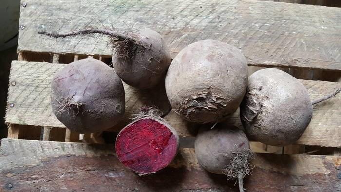 LOGO_ökologische Gemüse