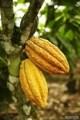 LOGO_Bulk Cacao Beans