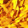 LOGO_Dried Mango