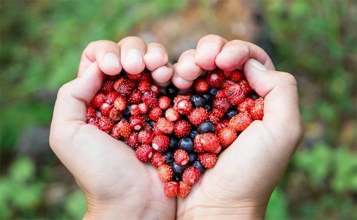 LOGO_Frozen organic berries