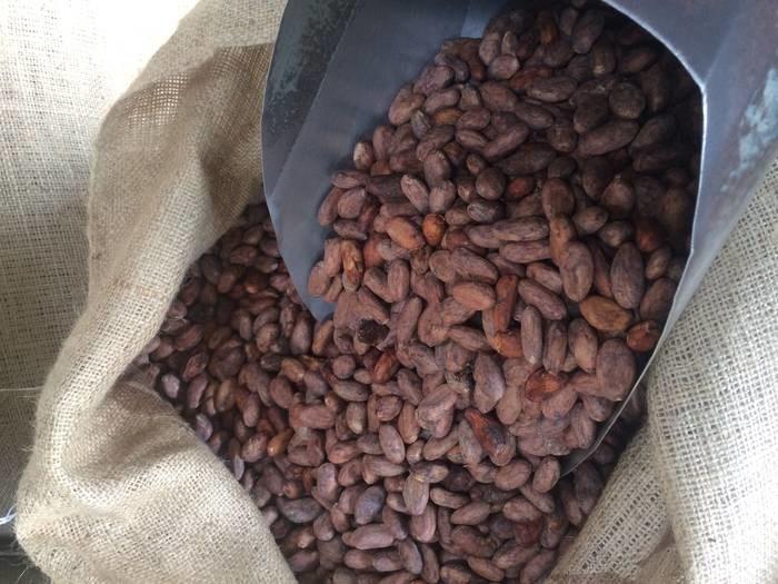 LOGO_Cocoa Beans