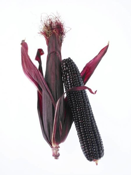 LOGO_Suntava Purple Corn®