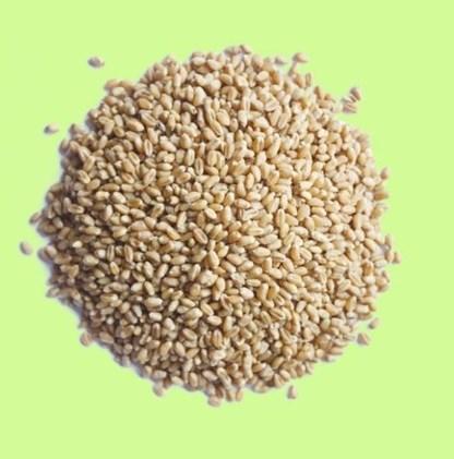 LOGO_Highland Barley