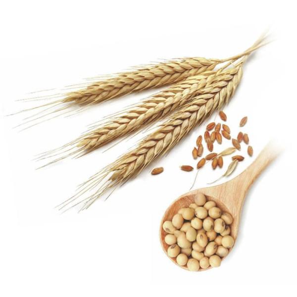 LOGO_ORGANIC Oil SEEDS & BEANS  (Sesame, Flax, Amaranth, Soybean)