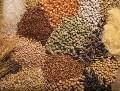 LOGO_Getreide - Kündig Bio Agrarprodukte