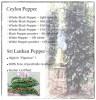 LOGO_Organic and Fair Trade Black Pepper