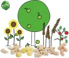 LOGO_Healthy Crisps for children, organic