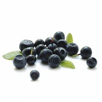 LOGO_Blueberry (Vaccinium myrtillus)