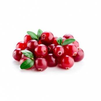 LOGO_Lingonberry (Vaccinium vitis-idaea)
