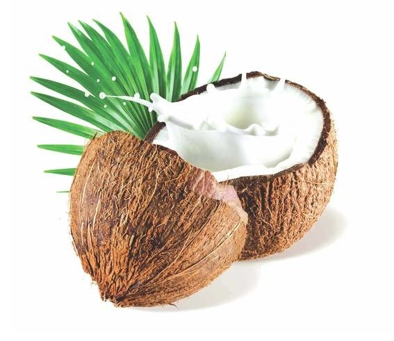LOGO_Organic Coconut Products