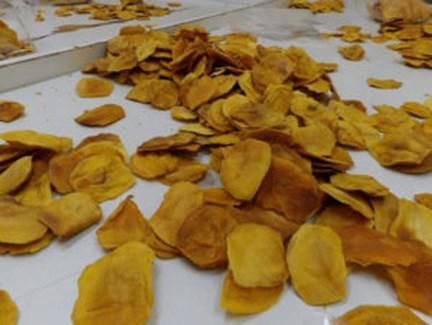 LOGO_Dry Mango