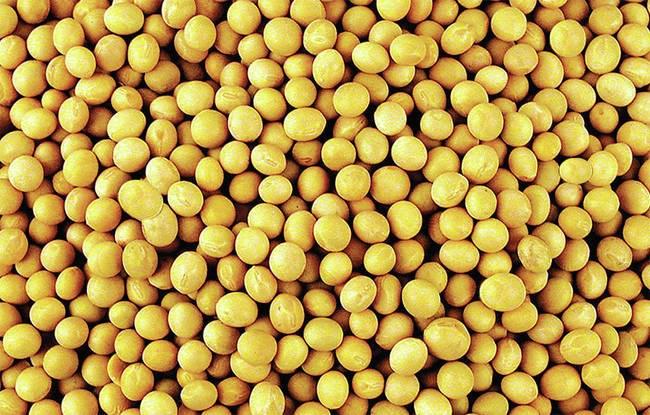 LOGO_Organic Soybeans