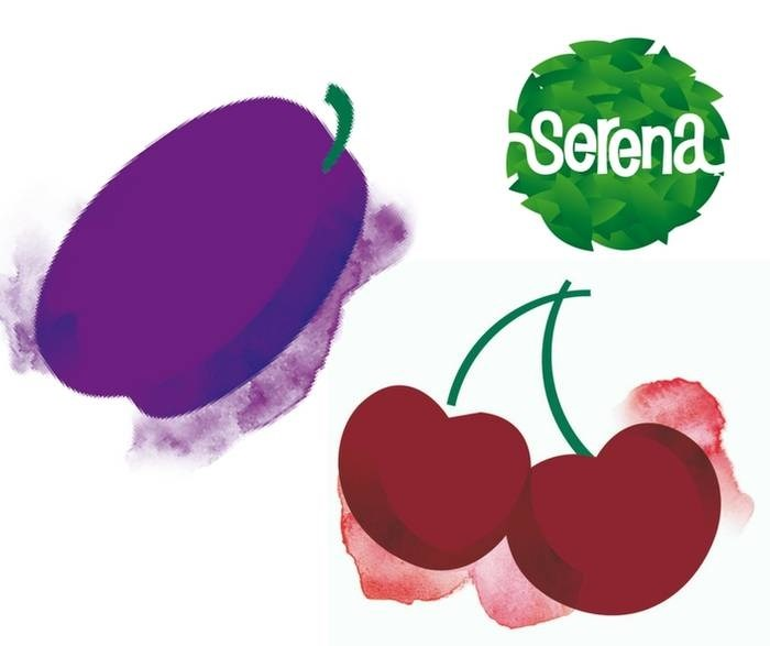 LOGO_Organic fresh cherries / plums