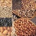 LOGO_Oil Seeds
