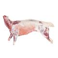 LOGO_Lamb carcasses