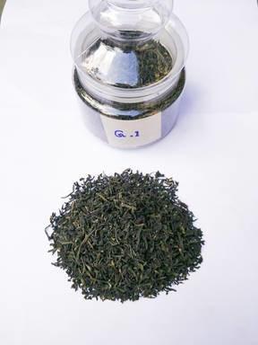 LOGO_Green Tea G-1