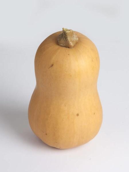 LOGO_Butternut pumpkin