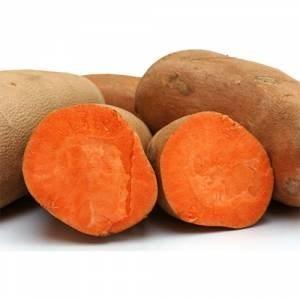 LOGO_Orange Sweet Potato