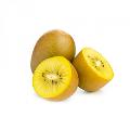 LOGO_Yellow Kiwi