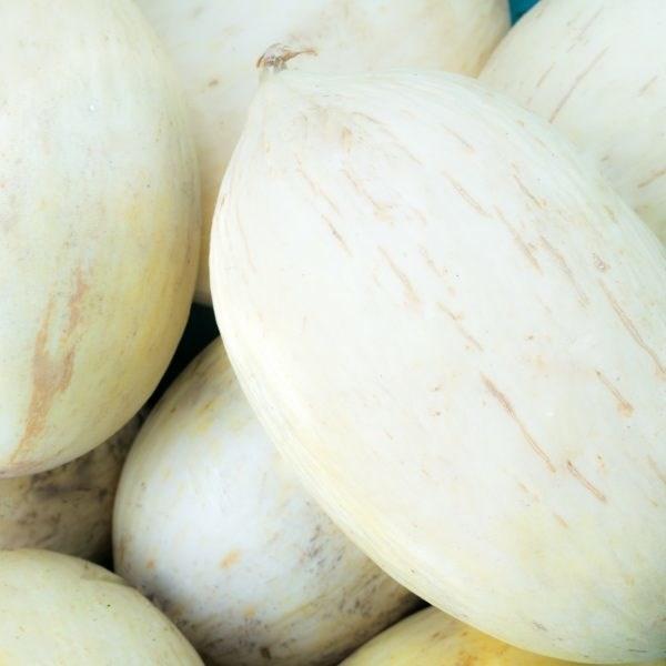 LOGO_Melon - Branco do Ribatejo