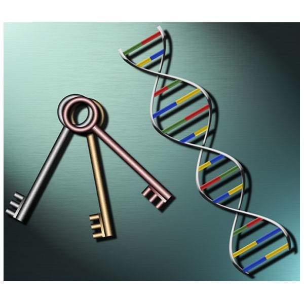 LOGO_PCR-Analysenservice