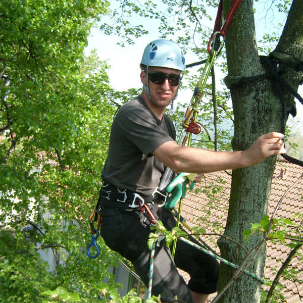 "LOGO_Training for arborists (600 h, degree of ""Fachagrarwirt Baumpflege und Baumsanierung"")"