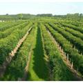 LOGO_Wide range TREES & SHRUBS