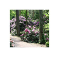 LOGO_Rhododendron