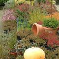 LOGO_Mutterpflanzen und Schnittblumen