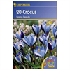 LOGO_Crocus speciosus  species Spring Beauty