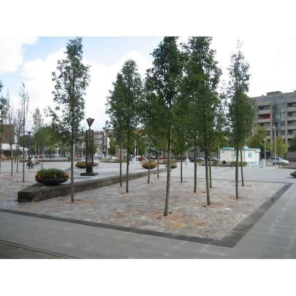 LOGO_Structural Soil