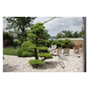LOGO_Garden Bonsai