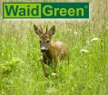LOGO_WaidGreen - Mischungen für Jagd, Forst und Imkerei